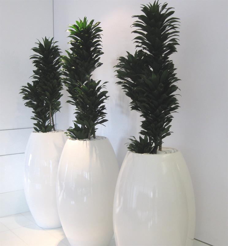 Superior Plantscapes_Miami